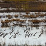 11Monsht wetlands and birds5